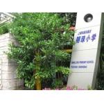 上海市明珠效果了小学