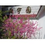 南京市考棚小学