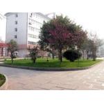 郑州回民中学(郑州六中)