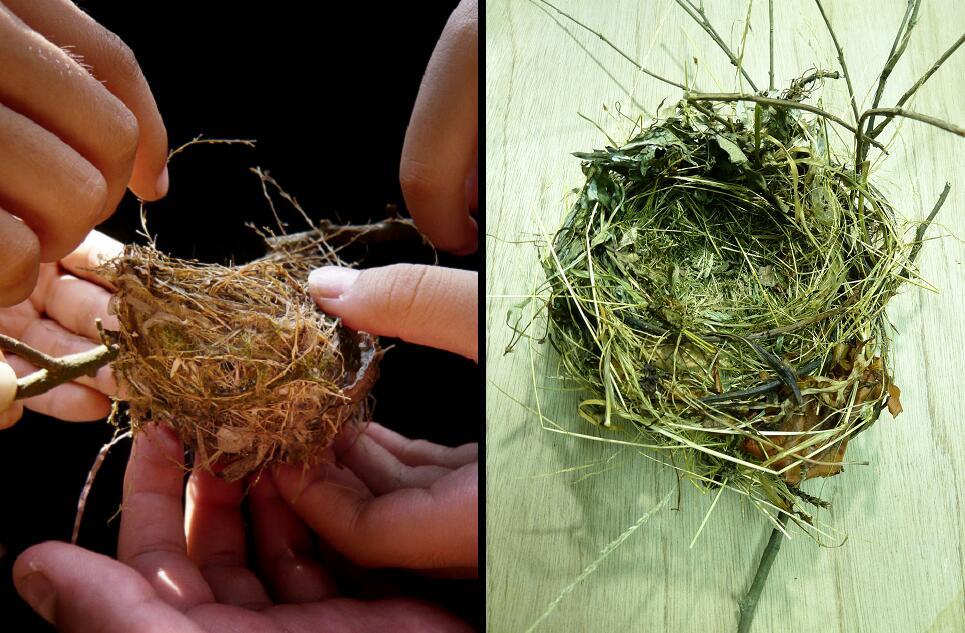茎的结构框架图