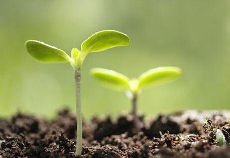 植物成长的图片素材