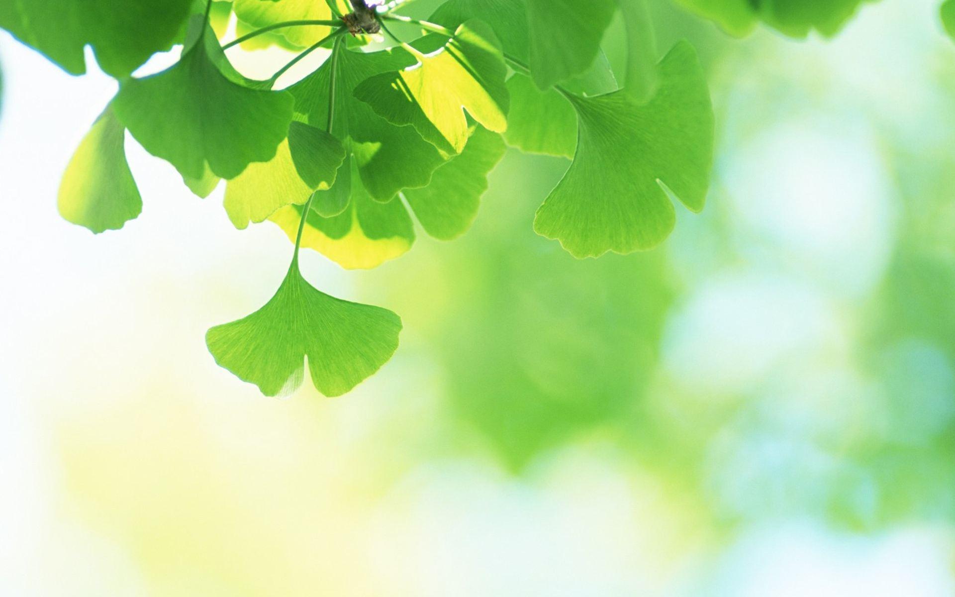 """绿在哪里  学校位于吵杂喧闹的马路边,然而一进入校门,映入眼帘的却是处处绿意盎然、草木扶疏的校园,校园涵盖前庭、中庭及后庭,植栽树木花草众多,绿覆绿极高,当初对""""绿色学校""""这一名词尚未深入了解时,总觉得已经够绿了,应是最名符其实的绿色学校!透过学习介绍,渐渐了解:原来绿色学校不只是种种花草已…,更是一分对环境价值的坚持。  秘密角落一: 阅读自然—后庭自然教学步道区  有人说象是一座公园,也由人说象是一座森林,更有人说象是世外桃源!但深处其中的师生似乎"""